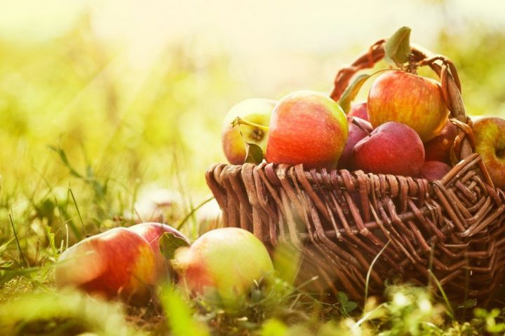 bigstock-Organic-Apples-In-Summer-Grass-43381285.jpg
